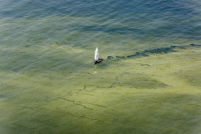 Pollution de l'eau aux algues verte. Lac Victoria