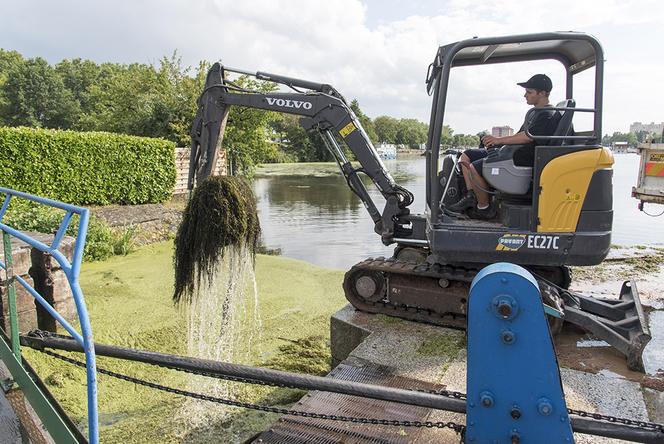 Invasion d'algues vertes dans la Loire et le port de Roanne