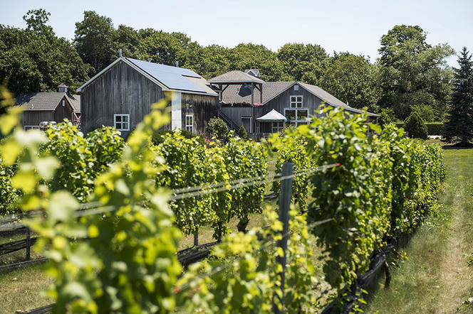 Viticulture, vignoble, vin Chenin Blanc