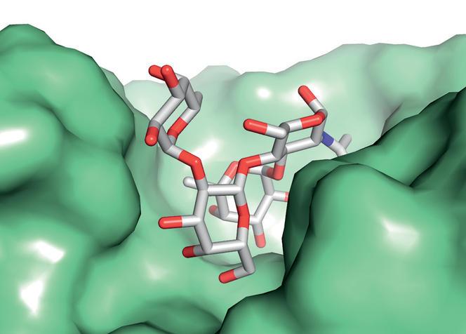anticorps_groupe_sanguin_72dpi