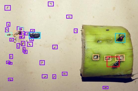 reconnaissance-visuelle-2_web_shop_header_image
