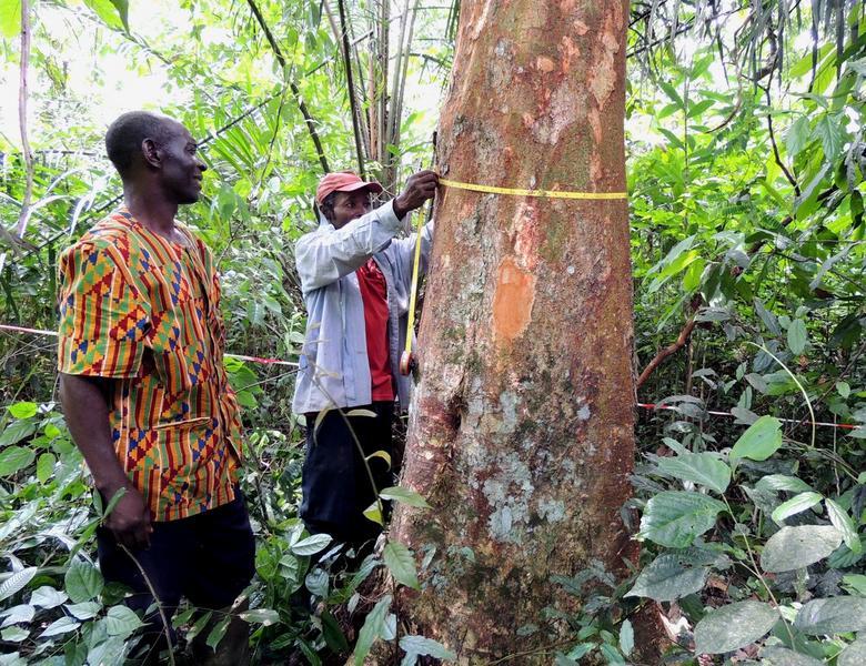 cacaoyeres-agroforestieres-l-art-de-concilier-production-durable-et-services-ecologiques_lightbox